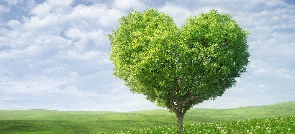 tree-love-sized